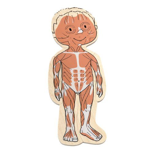 Amazon.com: Hape - Your Body - Boy 5-Layer Wooden Puzzle: Toys & Games
