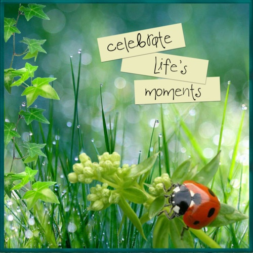 Celebrate Life Quotes: 127 Best Images About Celebrate Life On Pinterest