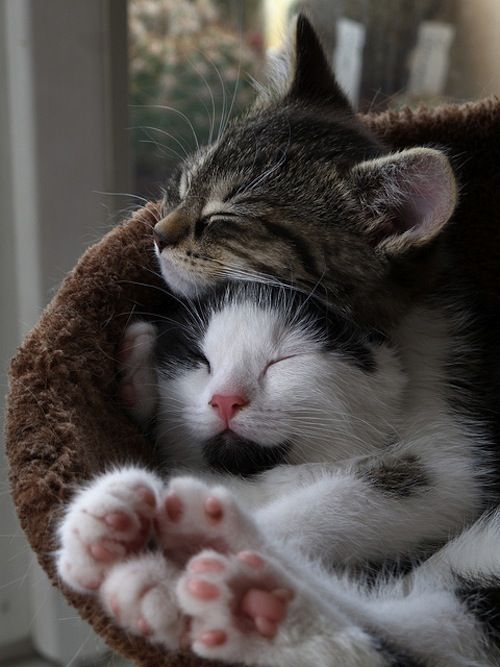 Cute Kittens And Puppies Together Sleeping Kittens sleeping together