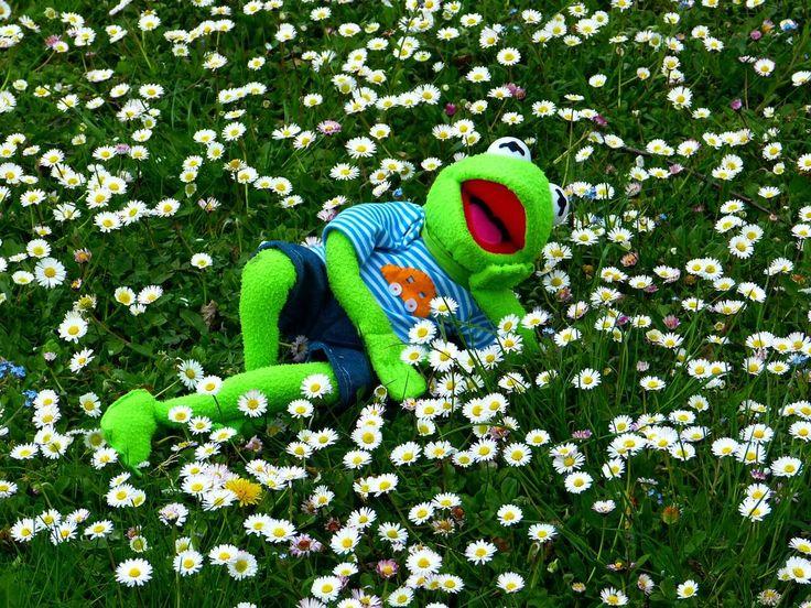 Virágos viccek: legjobb viccek, adomák, élcek virágokkal, virágokról, virágokkal, virágos humor, hogy ne csak borvirágos legyen a jó kedv http://balkonada.hu/hahota-viragos-viccek/