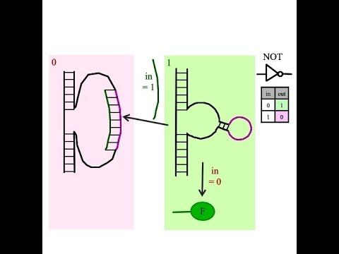 How do I build an NOT gate in a biological arithmetic logic unit?