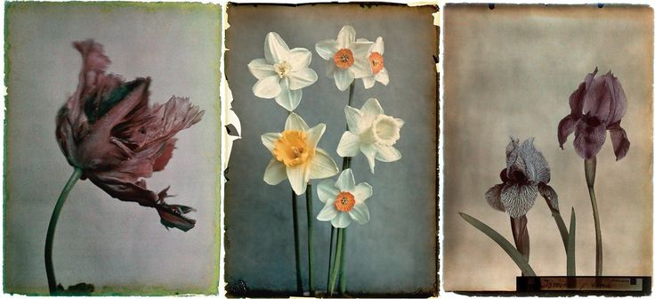 Silent Beauty: A Photographic Compendium of Flowers Leendert Blok dedicated his life to photographing 1920s botany, and the results are utterly compelling