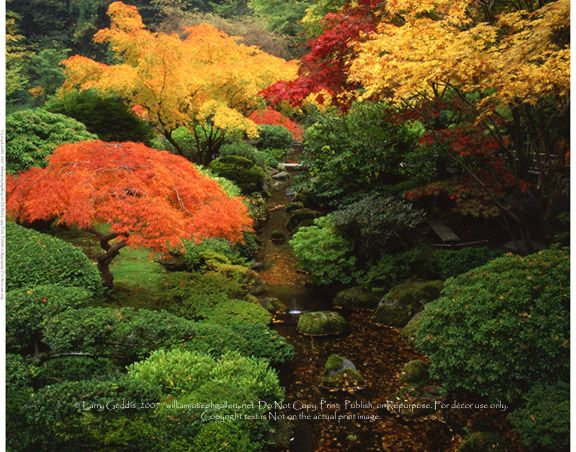 Geddis WJG G2157 Japanese Garden Autumn Trees SW Portland Oregon USA photos wsl brooks creeks streams parks color horizontal.jpg (576×452): Japa Gardens, Gardens Autumn, Magnif Yard, Japan Gardens In, Gardens Portland, Japanese Gardens, Japanese Inspiration, Autumn Trees, Mounds Color