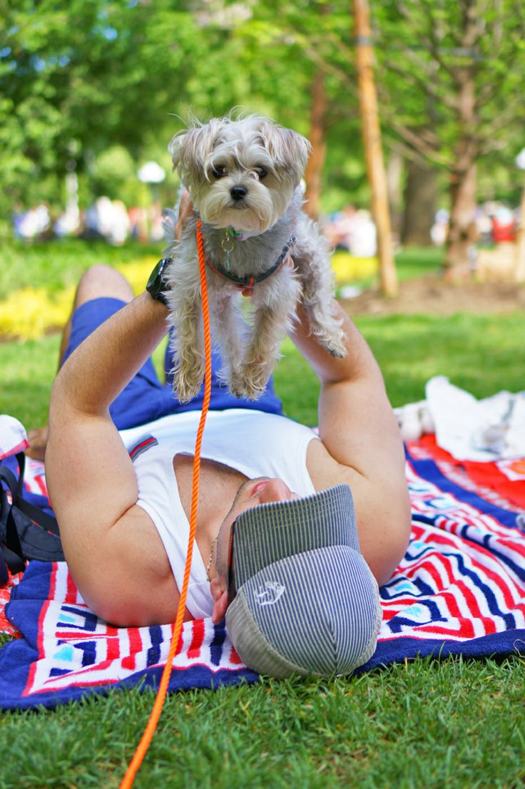 18 best Pet Friendly NYC images on Pinterest