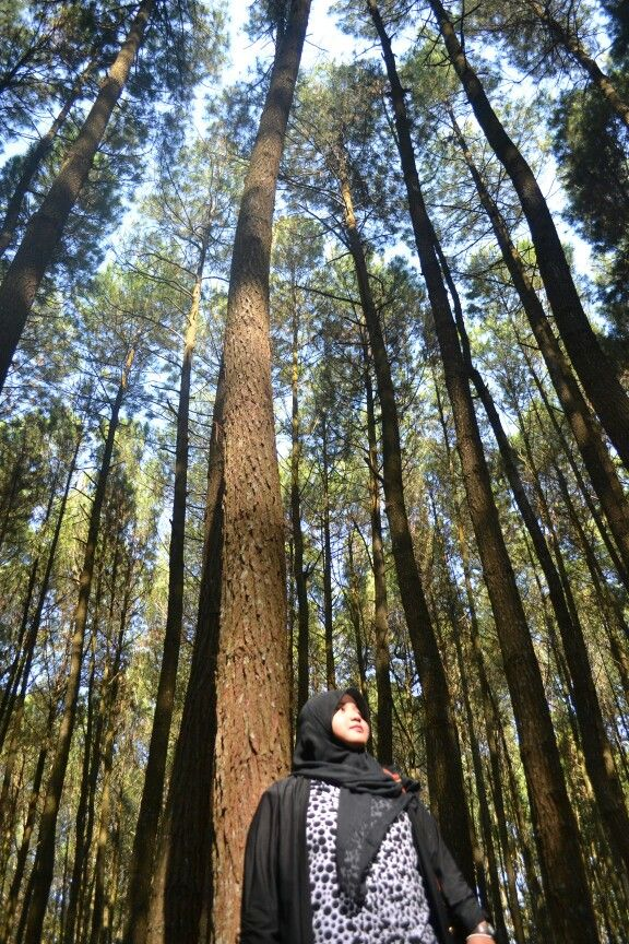 One day at pinus forest