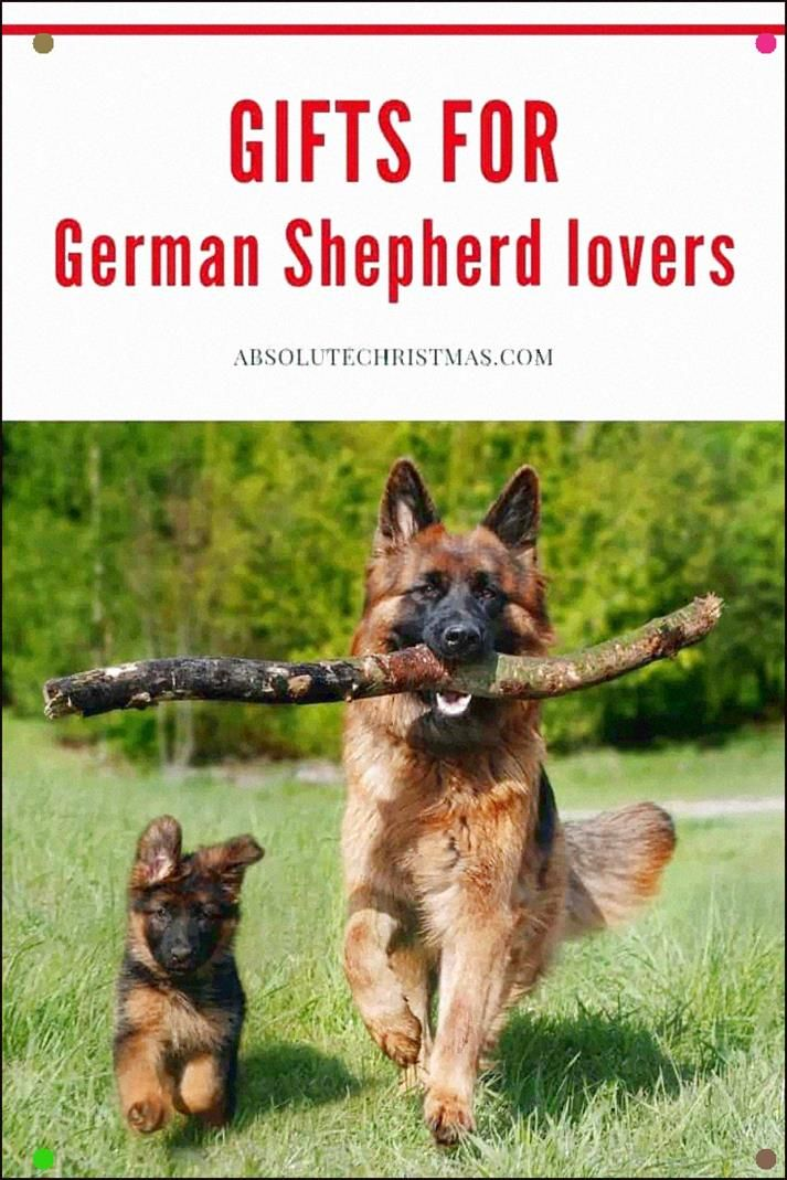 Gifts For German Shepherd Lovers What To Buy For A German Shepherd