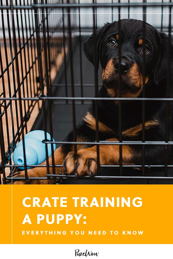 Crate Training A Puppy Absolutely Everything You Need To Know