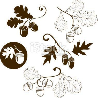 oak branch    Oak branch - Illustration