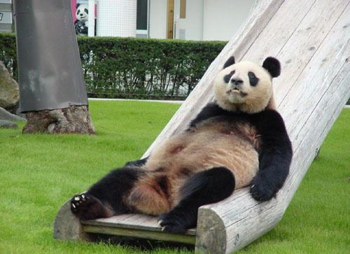 Click here for more adorable and funny panda photos!