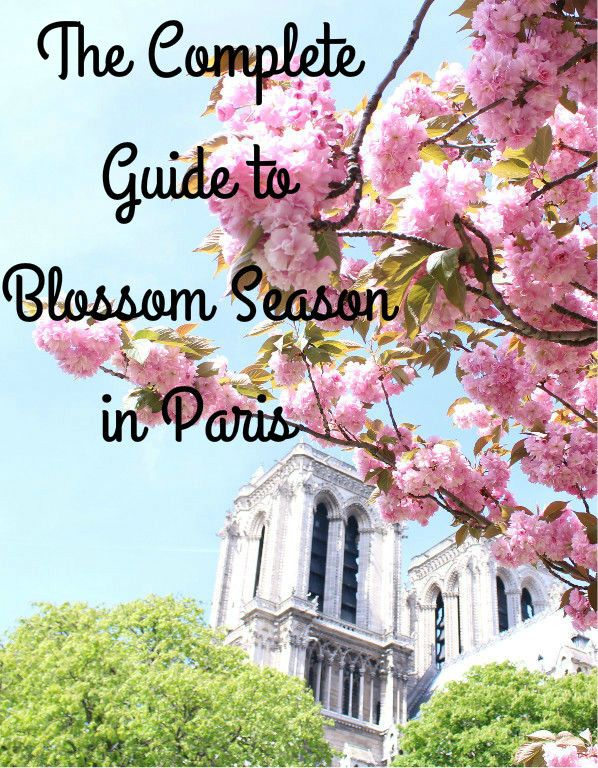 Spring in Paris with this comprehensive guide to all the best places for cherry blossoms- even places the Parisians don't know!   The Complete Guide to Blossom Season in Paris   Paris, France