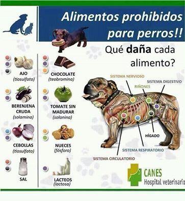 Alimentos prohibidos para el perro  -  Forbidden foods for dog