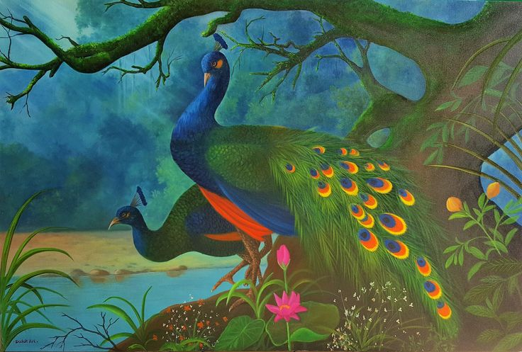 Majestic Peacocks