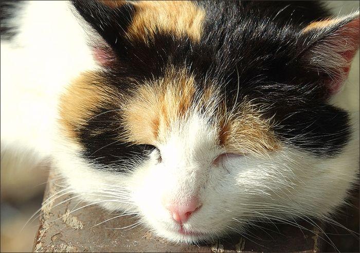 Schlafende Katze - Jahreszeiten - Galerie - Community