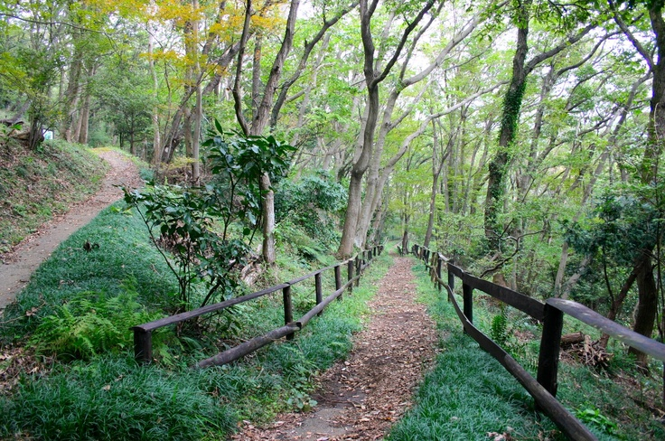 自然観察園での散策。
