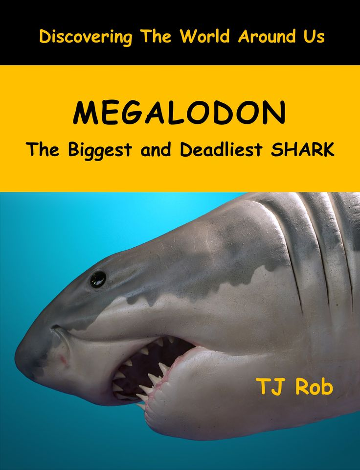 The Megalodon was the biggest and baddest shark that ever lived. These prehistoric creatures were 3 times larger than today's biggest Great White Shark! #giantshark #prehistoric #shark #megalodon #kidsbooks #extinctshark