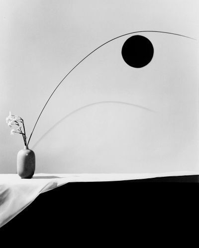 Robert Mapplethorpe  Flower