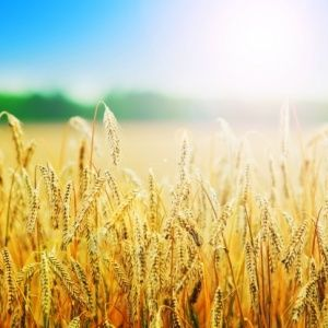 Agri SA's mission is to promote agriculture in South Africa in order to encourage its development and make it more profitable, stable and sustainable. Read more about Agri SA here: http://qoo.ly/jm7dc  #afsa #agrifood #southafrica #agri #agriculture #food #landbou #news #nuus #agrisa