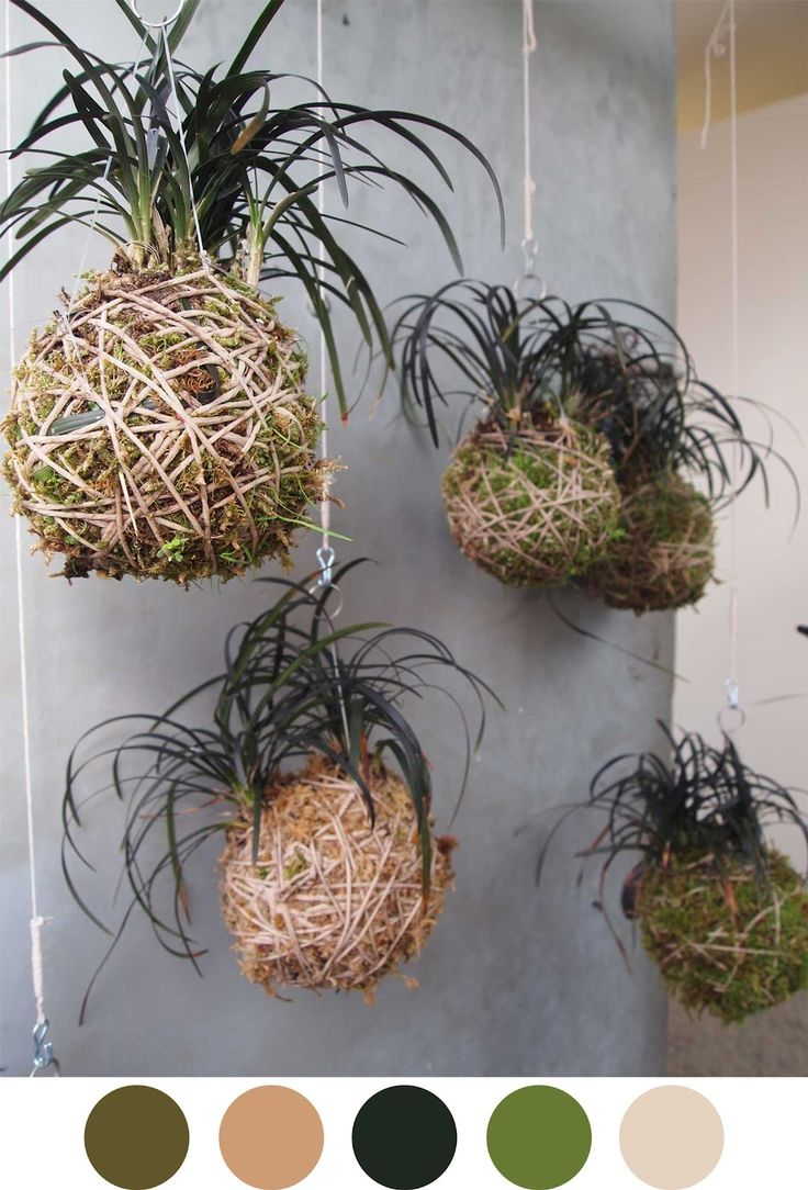 105 best kokedama images on Pinterest | Plants, String garden and ...