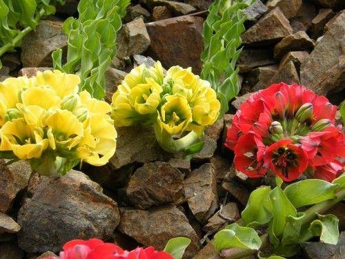 60 best images about desierto florido en el norte de chile