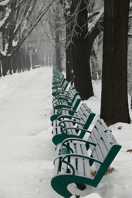 Benches in the snow | Flickr - Photo Sharing!