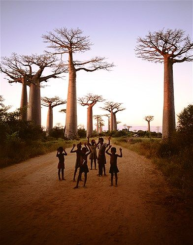 Children seem to echo the forms of the legendary baobab trees on a road through some of Madagascar's endangered forests.