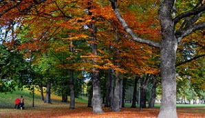 Autumn in The Palace Parc in Oslo #VisitNorway