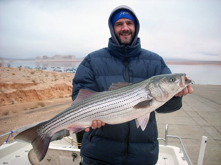 59 best stripers images on pinterest bass fishing for Striper fishing tips