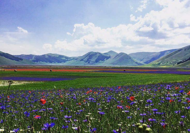 fioritura_casteluccionorcia_1.jpg (800×558)