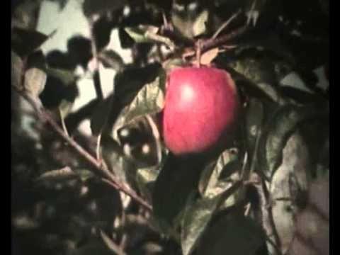 Mooi oude film over de teelt van appels van Nationaal Onderwijsmuseum. Duidelijke uitleg.