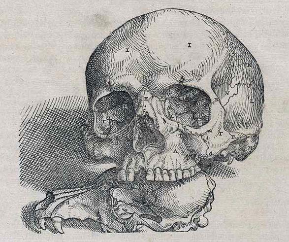 miasthmatic:    Plate from De humani corporis fabrica libri septem, 1543 by Andreas Vesalius.