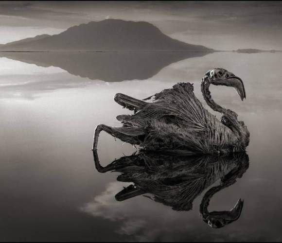 African Lake Turns Birds Into Gargoyles - Explore like a Gipsy, Study like a Ninja