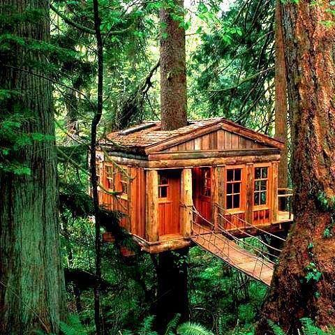 Tree House Washington State Tree Hobbit And Fairy