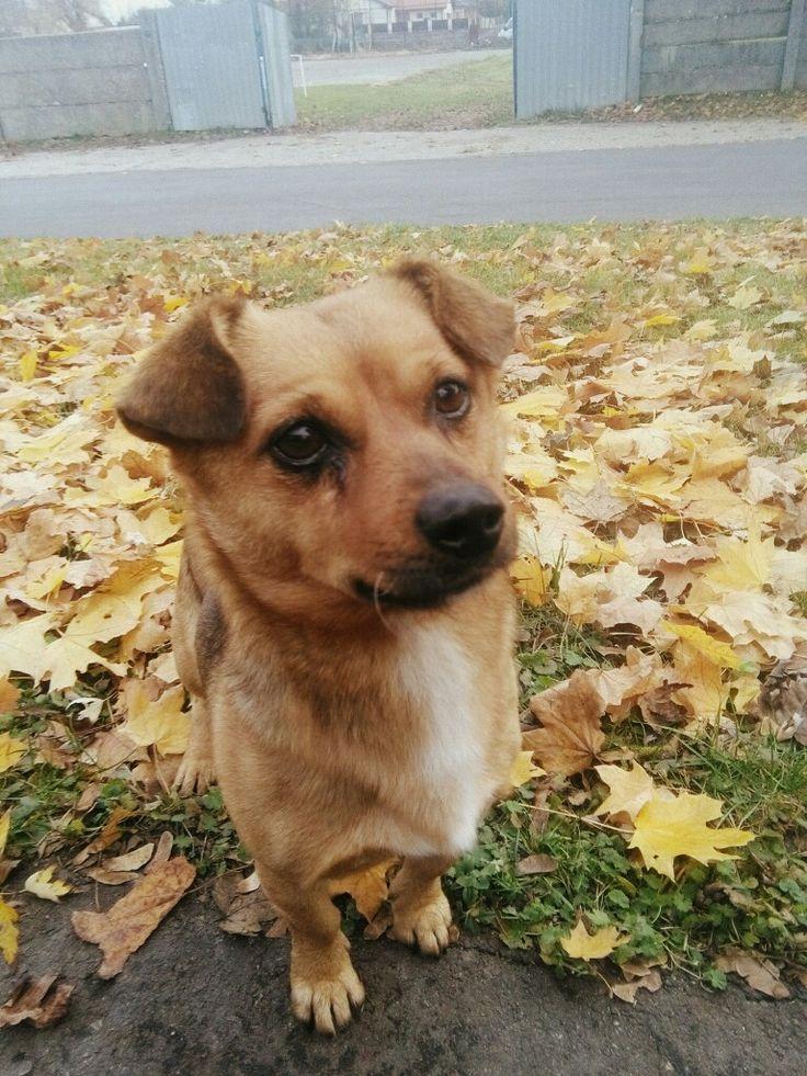 #Dog #Streetdog