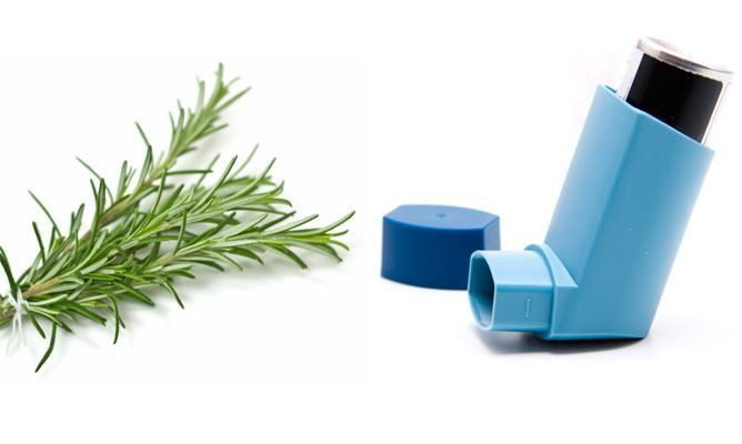 Tratamiento natural del asma con romero - Natural asthma treatment with rosemary