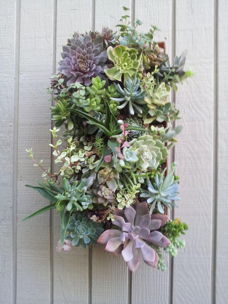 1000+ Images About Succulent Container Arrangements On