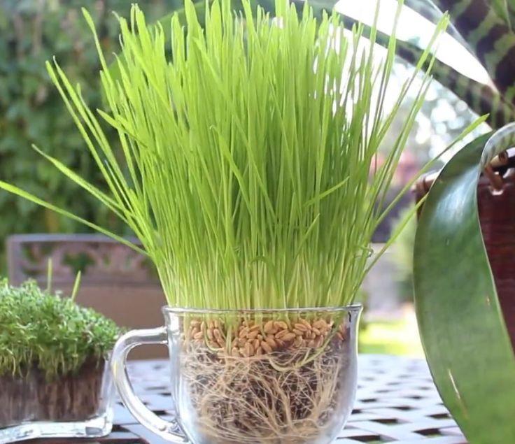 DAS Wundermittel für Pflanzen.