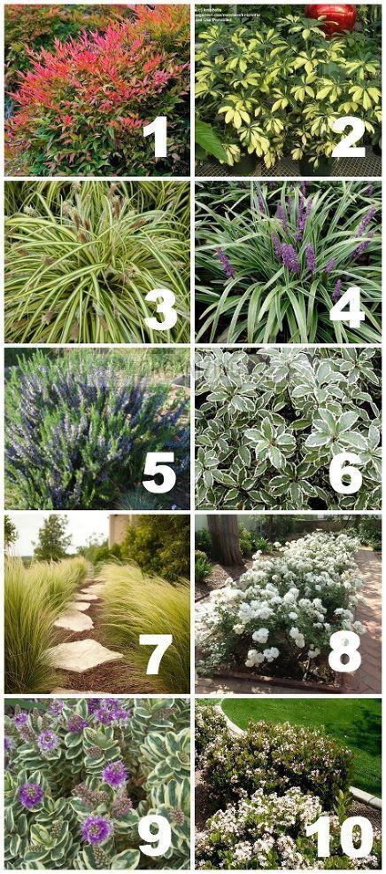 Plantas que toleran la sequia del.terreno
