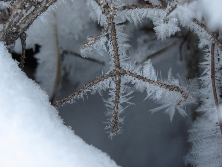 Ice crystals, Agassiz Provincial Forest, MB