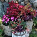 container gardening picture of shade plants in container gardens