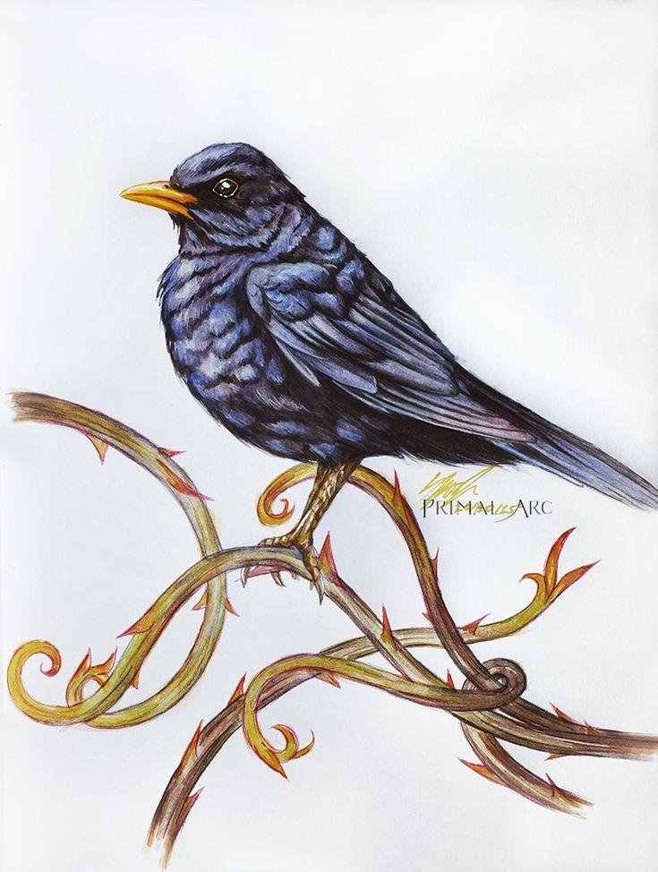 'Blackbird Study', watercolour. www.primalarc.com