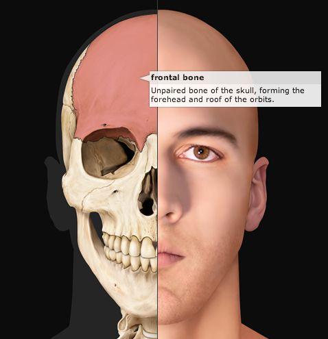 Более 25 лучших идей на тему «half skull» на pinterest | Эскиз, Skeleton