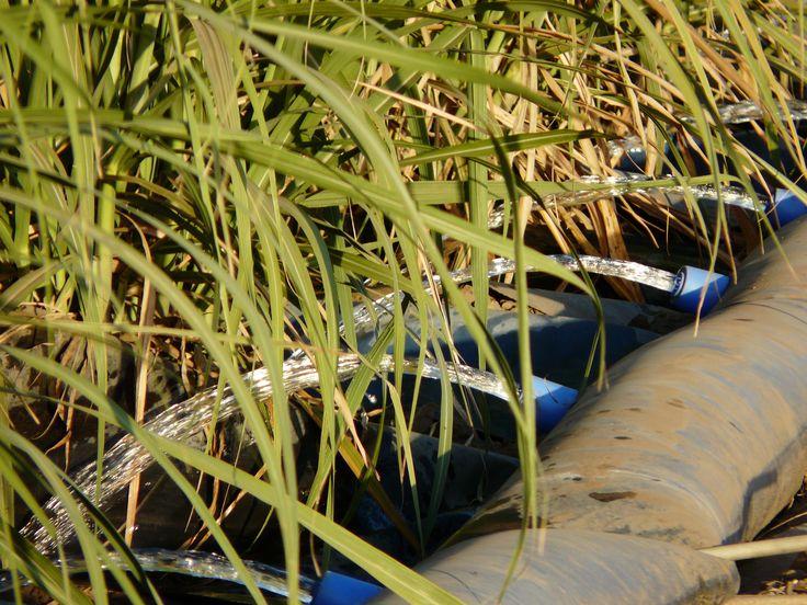 Watering the sugar cane. Canefarmers in the Burdekin region of North Queensland use water from the underground aquifer to flood irrigate. #visitburdekin #alivewithcuriosity
