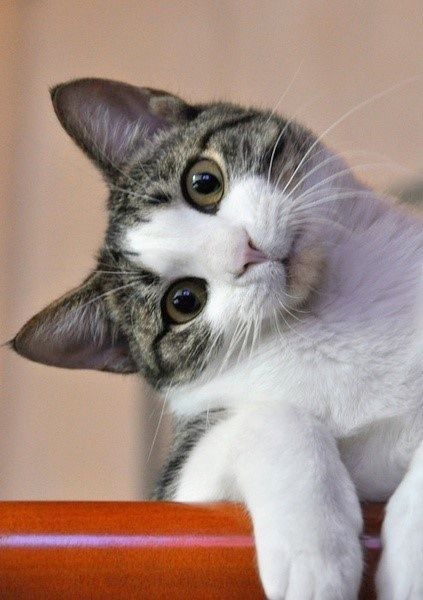 """* * """" Whys woulds anyone say dat 'cats are creepy' ? """""""