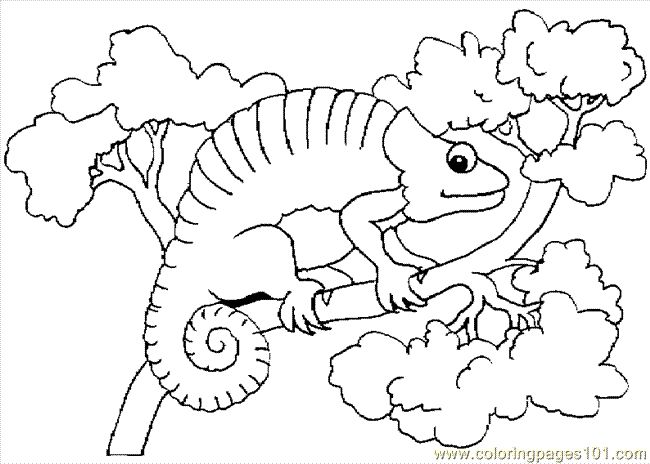 chrysanthemum by kevin henkes printables the mixed up chameleon coloring page - Chameleon Coloring Pages Printable