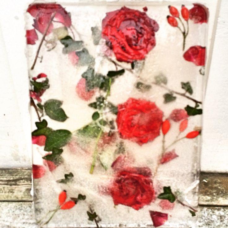 Tavla av is med rosor. Ice. Roses. Flower.