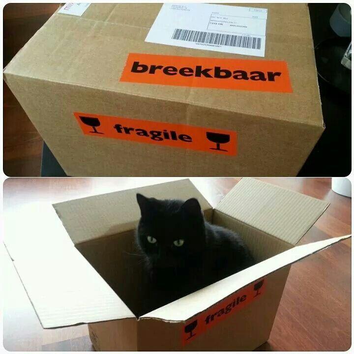 Dag 13 #100happydays Cadeautje van m'n lief bij de post!  En nee, het cadeau was geen duplicaat van Tjap, die deed alleen wat katten horen te doen met lege dozen ;-)