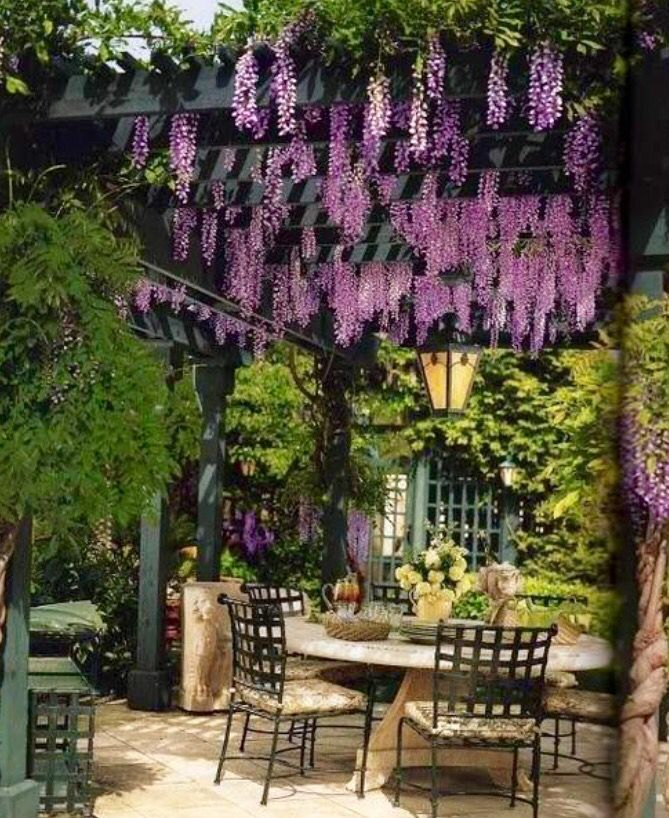 Beautiful Wisteria hanging down form the pergola in this inviting garden room.
