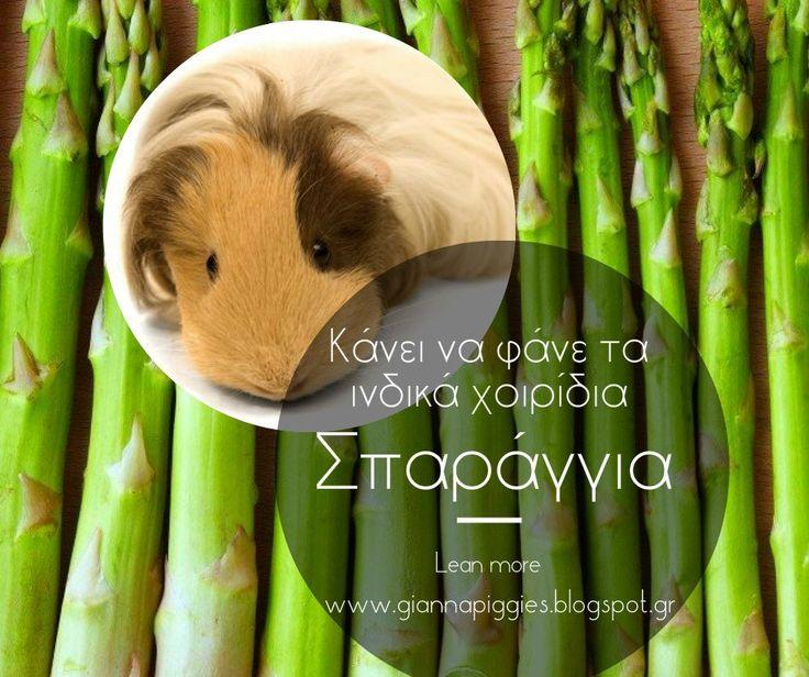 Can guinea pigs eat asparagus? Κάνει να φάνε τα ινδικά χοιρίδια σπαράγγια? Learn more www.giannapiggies.blogspot.gr
