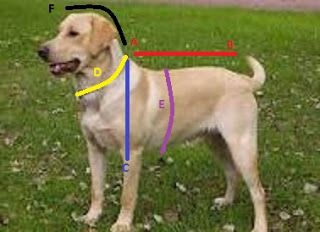 Como hacer patrones de ropa para perros - El costurero de Stella