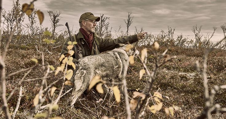2017-01-Elchjagd in Schweden - HALALI - Jagd, Natur und Lebensart